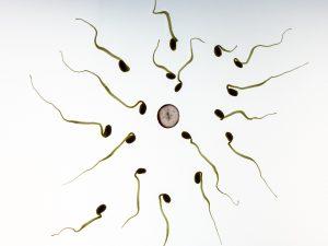 El esperma
